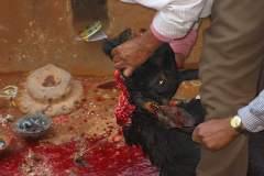 Erster Haarschnitt - Chudakarana -  Blut wird über den Altar verspritzt
