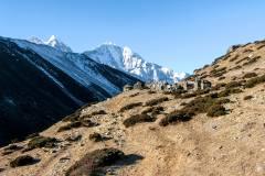 Himalaya-Kalapatar-Straeucher-Im-Gebirge