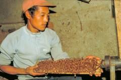 Herstellung tibetischer Räucherstäbchen - Durch den Wolf gedrehte Schnüre